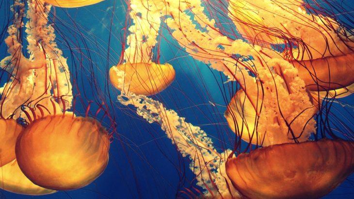 おっとっと深海生物を探そう